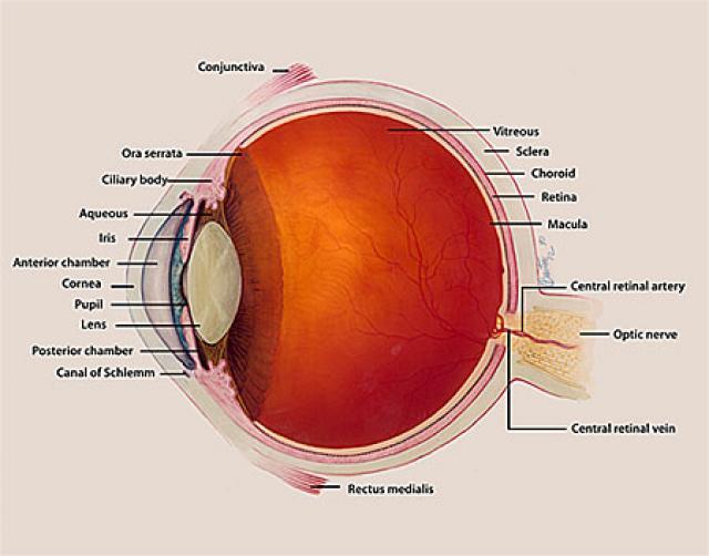 Enfermedades de la cornea